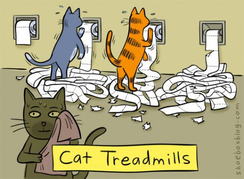 cat-treadmill.jpg